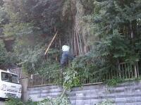 伐採 草刈り